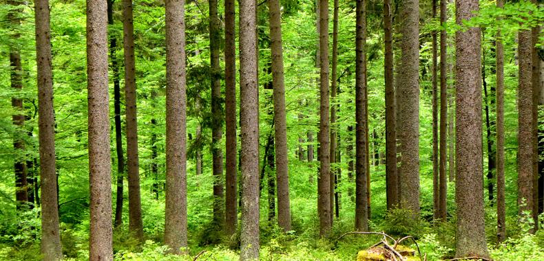 林業間伐イメージ写真