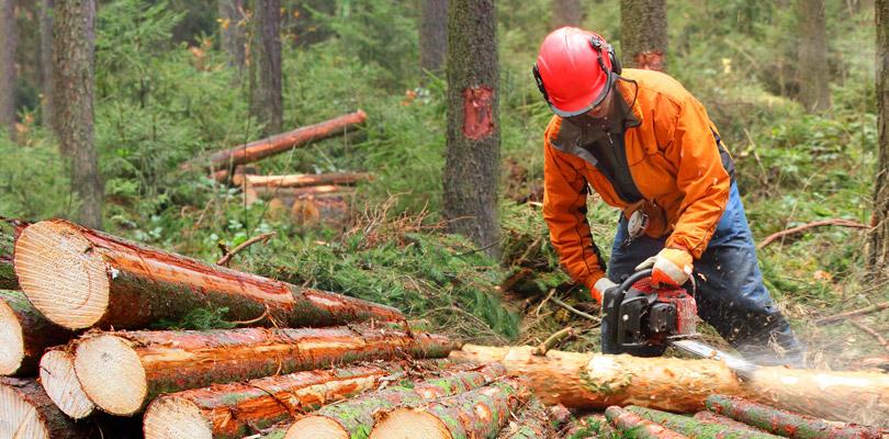 林業で地方創生
